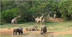 Limpopo Game Reserve Accommodation - Ka'ingo Reserve and Spa - Vaalwater Accommodation - Waterberg Game Reserves